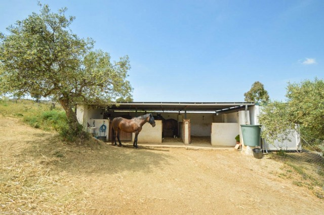 Stables-2